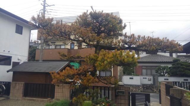 瀧本邸松治療